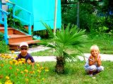 Внутренний двор. База отдыха Золотая бухта, г.Пицунда, Абхазия