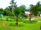 Территория. База отдыха Золотая бухта, г.Пицунда, Абхазия