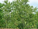 Плодовые деревья. Парк-отель