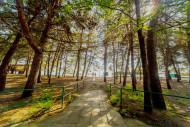 Абхазия Пицунда Литфонд парк