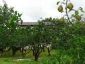 Гостевой дом «Целебный источник», Абхазия, г. Новый Афон, п. Приморское мандариновый сад